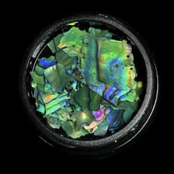 Magpie Shells - Green