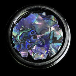 Magpie Shells - Blue